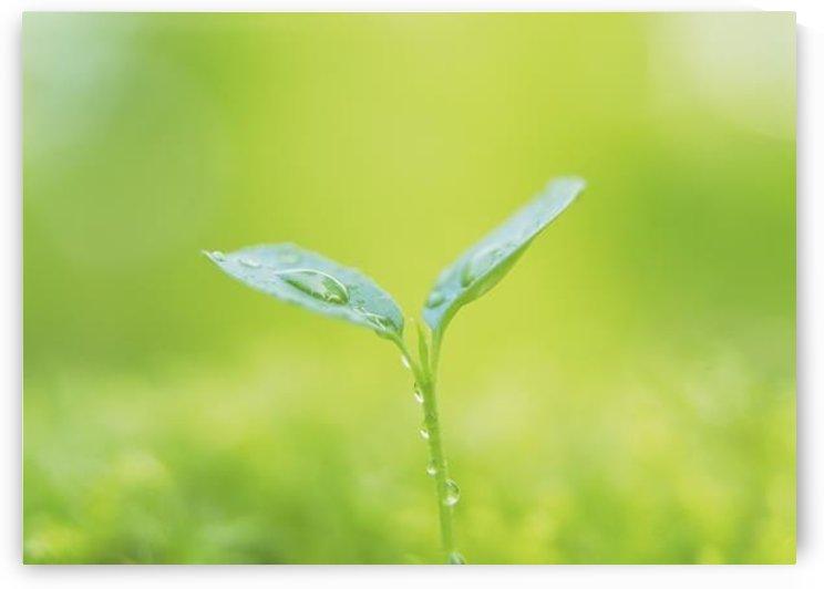 landscape_2_0846 by Stock Photography