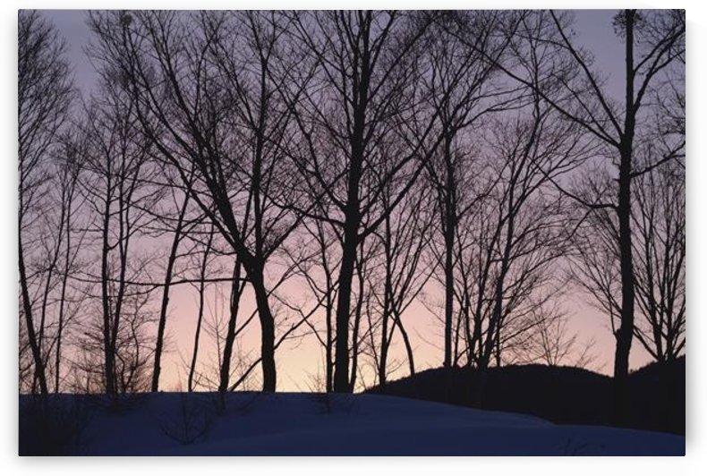 landscape_2_1031 by Stock Photography