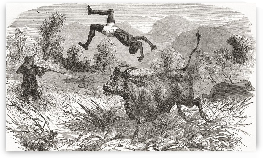 Hunting buffalo in Africa in the nineteenth century. From El Museo Popular, published 1887. by PacificStock