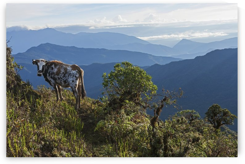 Mountain range east of Pojo; Departamento Cochabamba, Bolivia by PacificStock