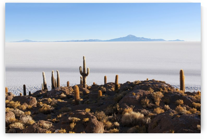 View from Isla del Pescado to Salar de Uyuni; Bolivia by PacificStock