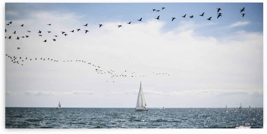 Sailboats cruise the waters of Lake Ontario as a flock of water birds take to the air; Toronto, Ontario, Canada by PacificStock