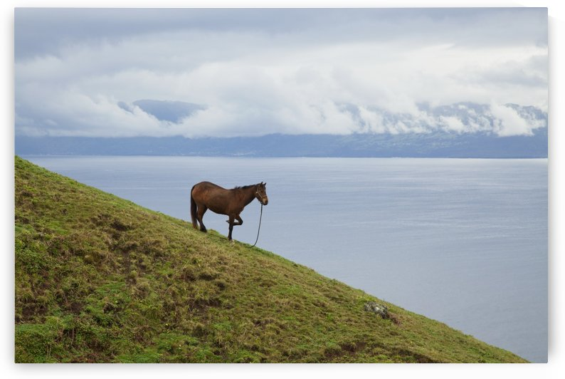 Horse on a hillside overlooking the water, near Velas; Sao Jorge Island, Acores, Portugal by PacificStock