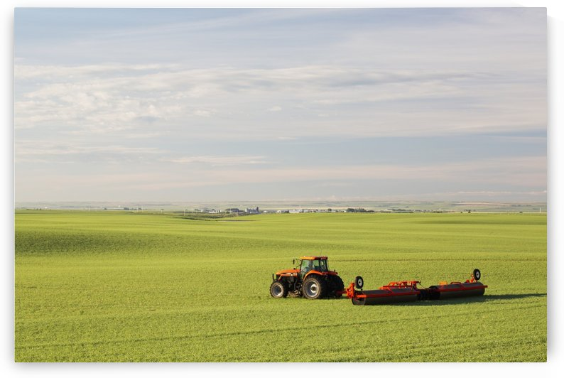 Tractor and land roller in an early growth cereal grain field. Land rollers flatten high spots and press rocks into the soil, providing a level surface during harvest and reduced moisture loss; Alberta, Canada by PacificStock