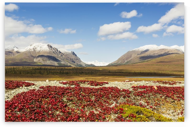 Bearberry leaves in the foreground with Mount Moffit and McGinnis Peak of the Alaska Range seen through Landmark Gap in the background along the Denali Highway in Southcentral Alaska by PacificStock