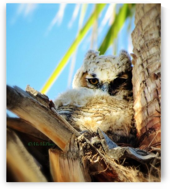 Baby Horned Owl by MiMi Paris