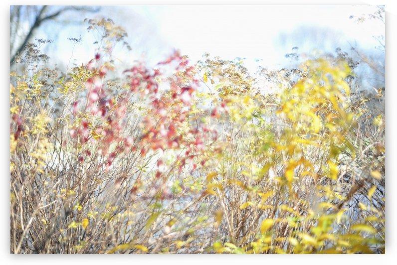Fall colours in midtown Toronto; Toronto, Ontario, Canada by PacificStock