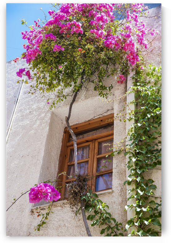 Blossoming flowers and a vine decorate the exterior of a house; Chania, Crete, Greece by PacificStock