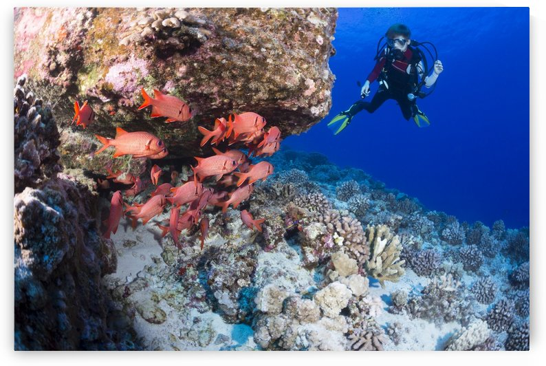 Twelve year old junior certified scuba diver and a school of shoulderbar soldierfish (Myripristis kuntee) at Molokini Marine Preserve; Maui, Hawaii, United States of America by PacificStock