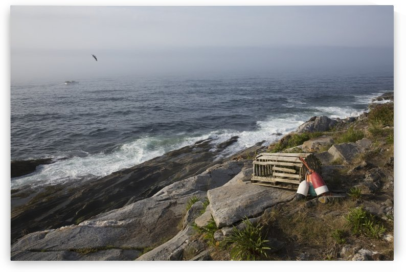 Old wooden lobster trap and buoys by wild roses, on bluff overlooking Atlantic Ocean, Pemaquid Peninsula; Maine, United States of America by PacificStock