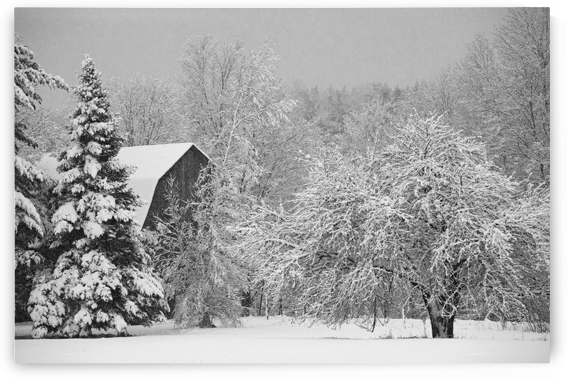 Snow covered trees and rooftop of a barn; Waterloo, Quebec, Canada by PacificStock