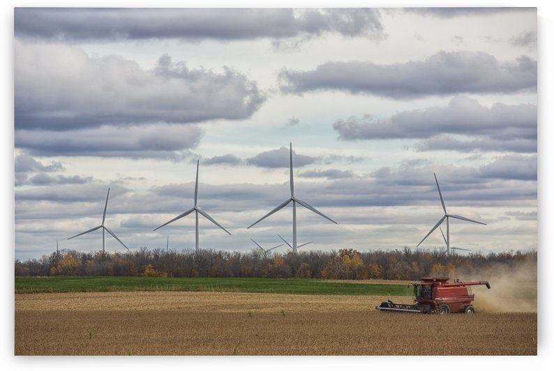 A combine harvests soybeans while wind turbines spin in the distance; Strathroy, Ontario, Canada by PacificStock