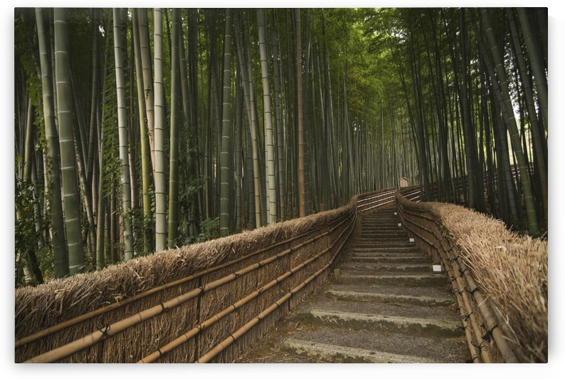 Stone pathway in bamboo forest; Arashiyama, Kyoto, Japan by PacificStock