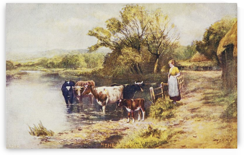 Vintage greeting card with illustration of milkmaid next to cows in a stream from the 19th century. by PacificStock