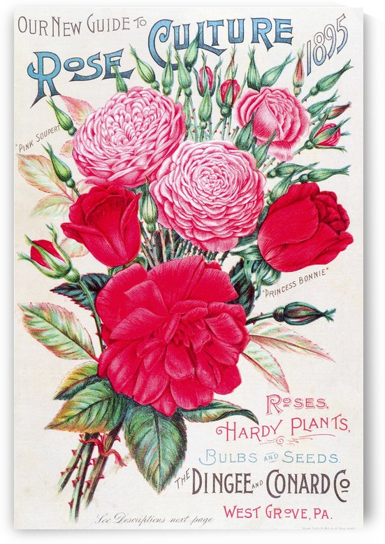 Historic Dingee and Conard Co. rose bulb and seed catalog from 19th century. by PacificStock