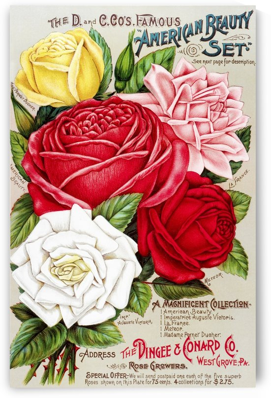 Dingee and Conard Co. rose bulb and seed catalog from 19th century. by PacificStock