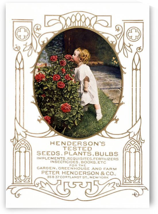 Historic Henderson's seed catalog with illustration of child smelling roses from 20th century. by PacificStock