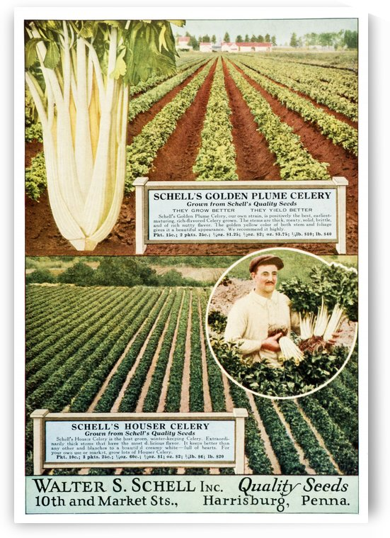 Historic Walter S. Schell seed catalog from 20th century. by PacificStock