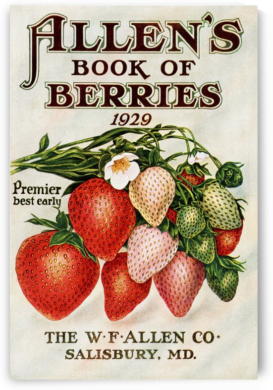 Historic Allen's Book of Berries with illustration of strawberries from 20th century. by PacificStock
