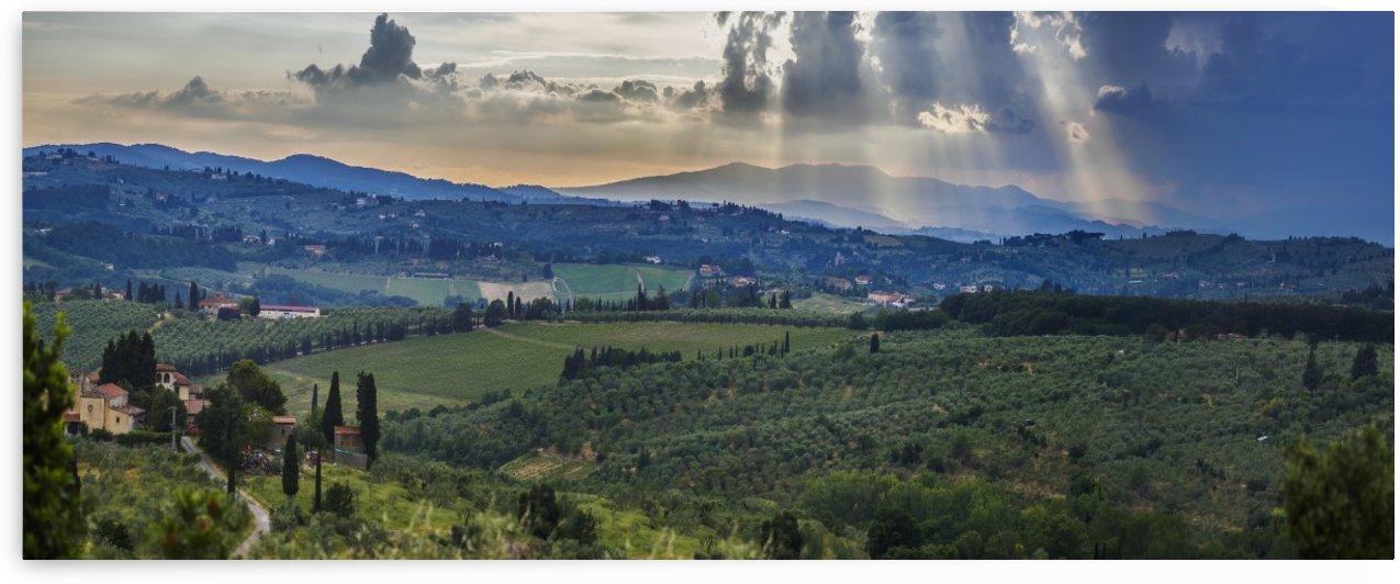 Sunbeams through the clouds over vineyards; Capanuccia, Florence, Italy by PacificStock