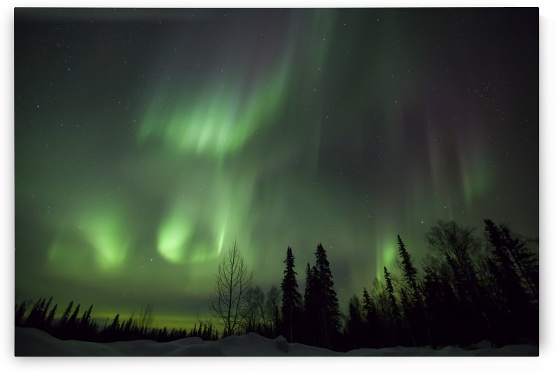 The green glow of the Aurora Borealis (Northern Lights) from the Petersville Road, Southcentral Alaska, Winter by PacificStock