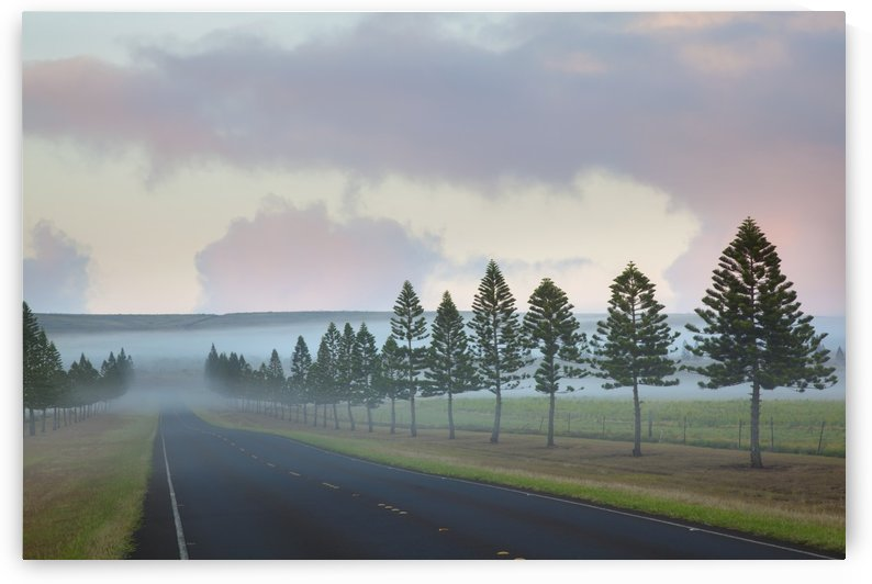 The foggy tree-lined Manele Road (highway 440) at sunrise; Lanai, Hawaii, United States of America by PacificStock