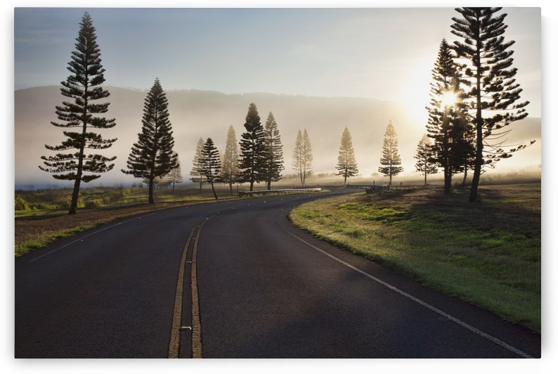 Early morning fog on Manele Road; Lanai, Hawaii, United States of America by PacificStock