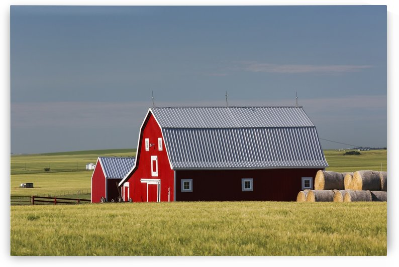 Bright red barn with round hay bales in green grain field with blue sky; Alberta, Canada by PacificStock