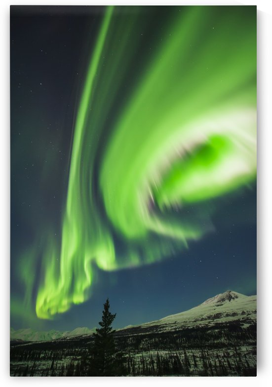 Aurora borealis over trees along the Denali Highway east of Cantwell, Alaska. by PacificStock