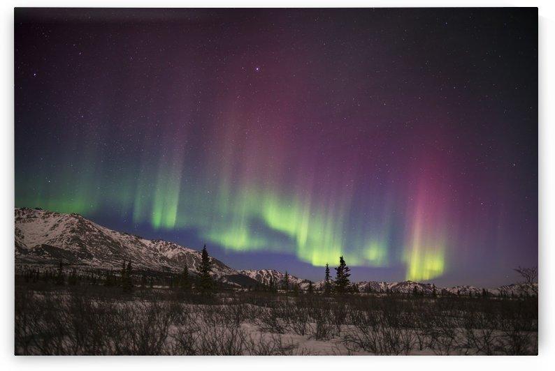 Green and pink aurora borealis over the Alaska Range in Denali National Park & Preserve, Alaska. by PacificStock