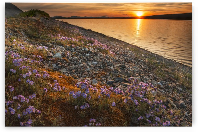 Blue flax and sunset at Lower Twin Lake, Lake Clark National Park & Preserve, Southcentral Alaska by PacificStock