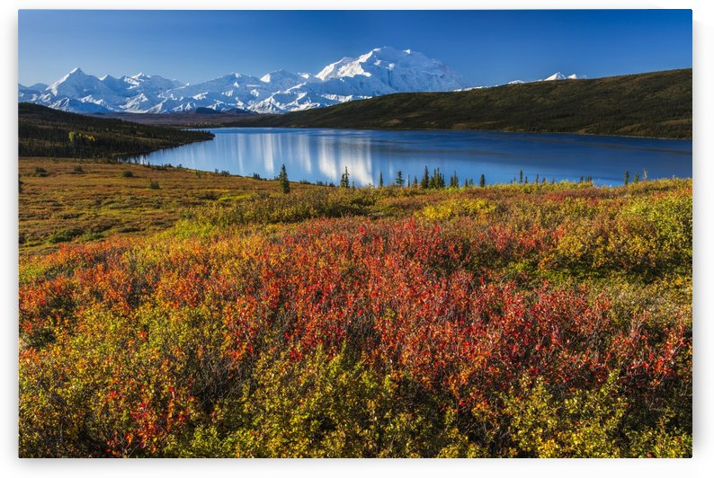 Fall colors at Wonder Lake in morning light, Denali National Park & Preserve. by PacificStock