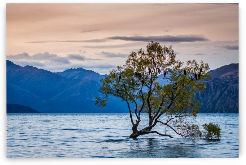 One_tree_lake by DLPSquared