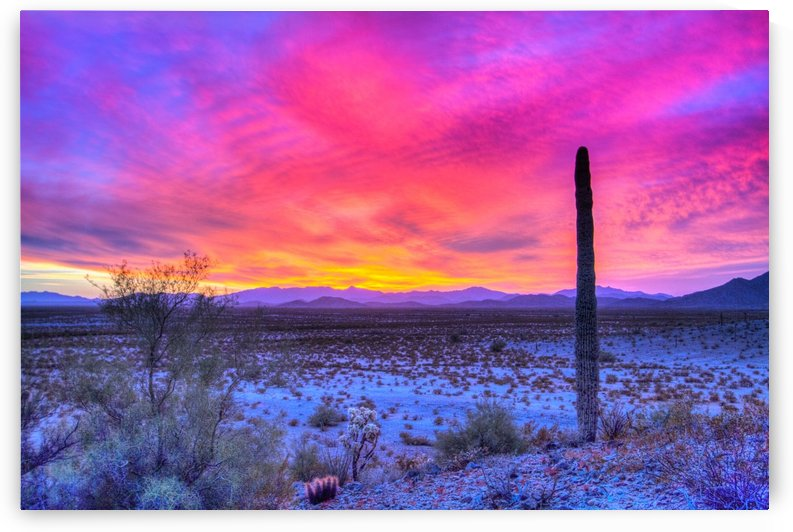 Sonoran_sunset by DLPSquared