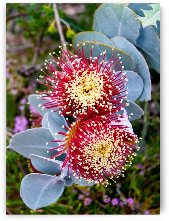 Spiny Flowers by DLPSquared