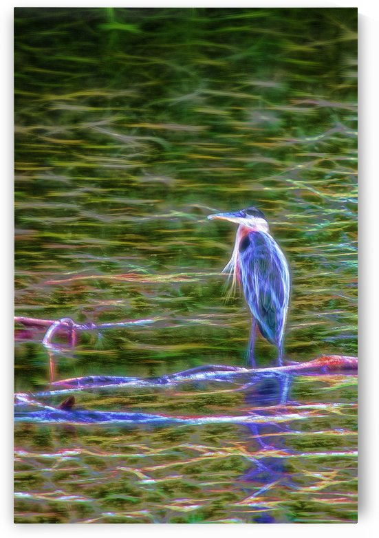 INSPIRITED NIGHT HERON by Art Scott