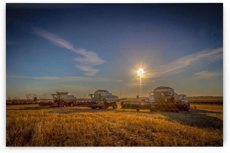 Harvest on the Prairies by DLPSquared