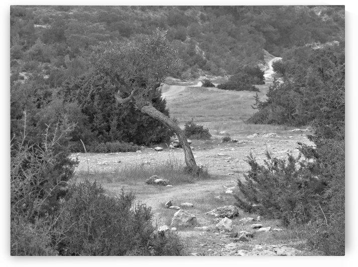 Deserted area on the western coast of the island of Cyprus by Vlad Radulian