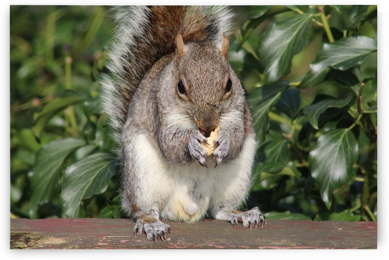 nutty friend by sarah fairest