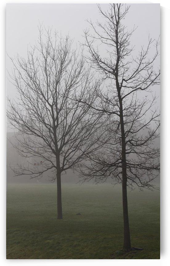 trees in fog by sarah fairest