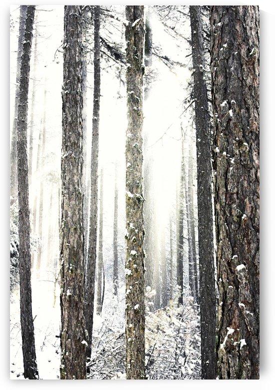 Forest storm by Marko Radovanovic