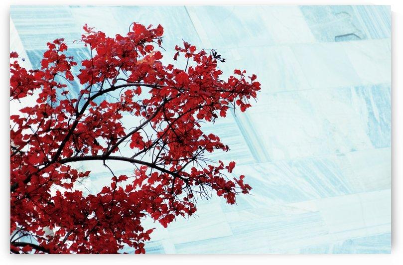 Red flowers by Marko Radovanovic