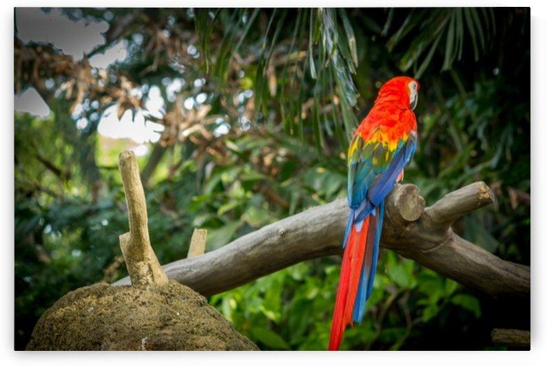 Nature and Birds   1 by Jeetendra Kumar Choudhary