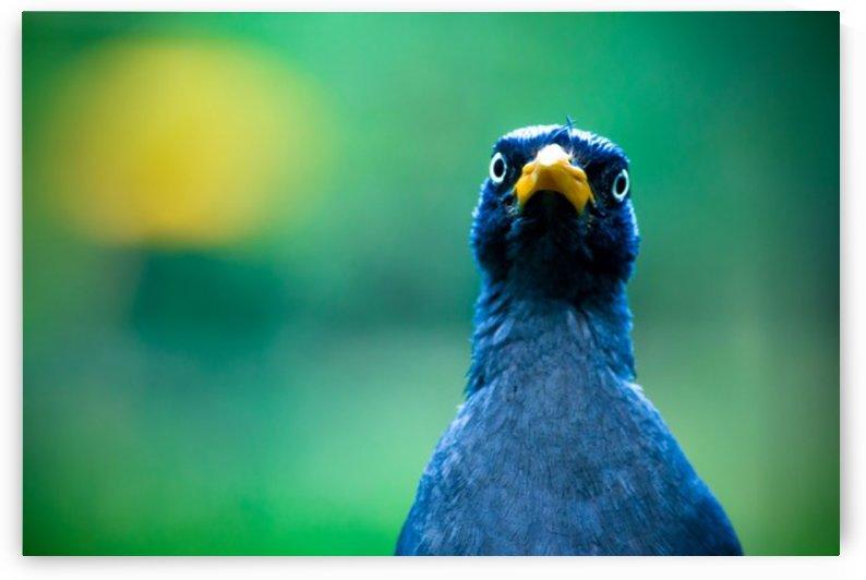 Nature and Birds   10 by Jeetendra Kumar Choudhary