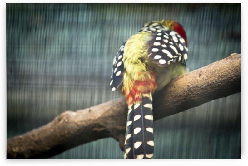 Nature and Birds   11 by Jeetendra Kumar Choudhary