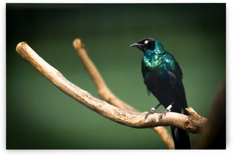 Nature and Birds   12 by Jeetendra Kumar Choudhary