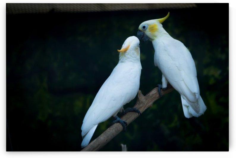 Nature and Birds   15 by Jeetendra Kumar Choudhary
