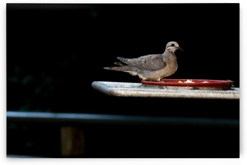 Nature and Birds   16 by Jeetendra Kumar Choudhary