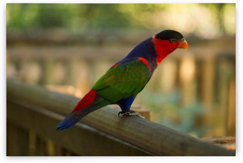 Nature and Birds 17 by Jeetendra Kumar Choudhary