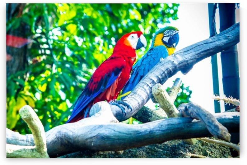 Nature and Birds  2 by Jeetendra Kumar Choudhary